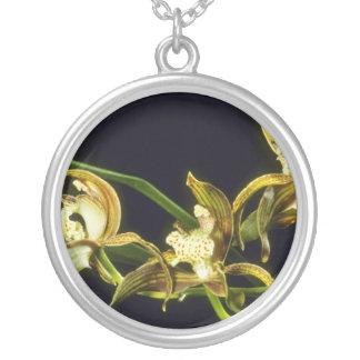 Flores de Eburneum de la cal (Cymbidium) Grimpolas