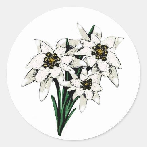 Flores de Edelweiss Pegatina Redonda
