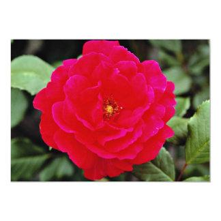 Flores de Floribunda Comunicado Personal