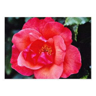 Flores de Floribunda Anuncio