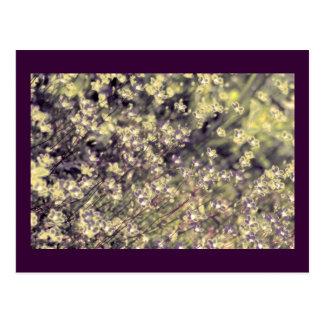 Flores de hadas de la lavanda y de la cal plantil