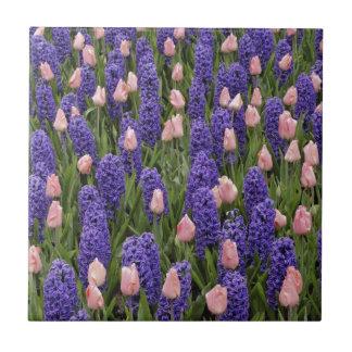 Flores de Holanda de jacintos y de tulipanes rosa Azulejos