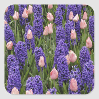 Flores de Holanda de jacintos y de tulipanes rosa Calcomania Cuadradas
