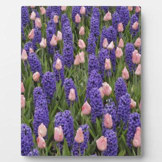 Flores de Holanda de jacintos y de tulipanes rosa Placa De Plastico