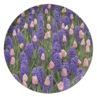 Flores de Holanda de jacintos y de tulipanes rosa Platos