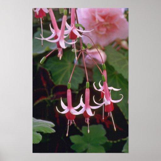 Flores de inclinación póster