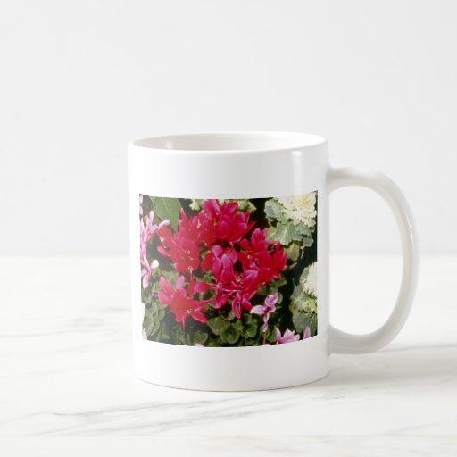 Flores de Indicum del Cyclamen Taza De Café