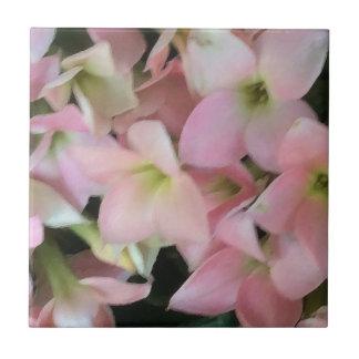 Flores de Kalanchoe Azulejo Cuadrado Pequeño