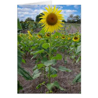 Flores de Kansas Felicitación