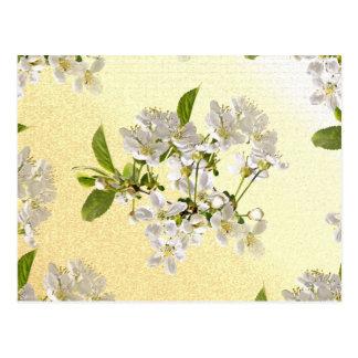 Flores de kirsch de caza tarjetas postales