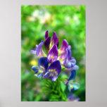 Flores de la alfalfa poster