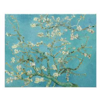 Flores de la almendra de Vincent van Gogh Fotografías