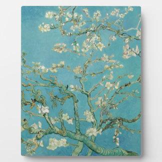 Flores de la almendra de Vincent van Gogh Placas De Plastico