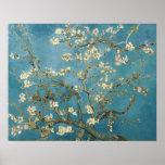 Flores de la almendra de Vincent van Gogh Poster