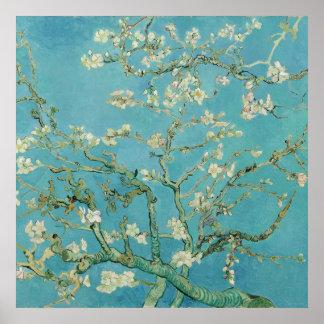 Flores de la almendra de Vincent van Gogh Póster
