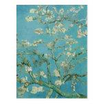 Flores de la almendra de Vincent van Gogh Tarjetas Postales