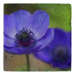 Flores de la amapola azul