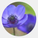 Flores de la amapola azul etiquetas redondas