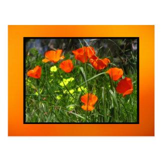 Flores de la amapola de California Postal