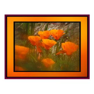 Flores de la amapola de California Postales