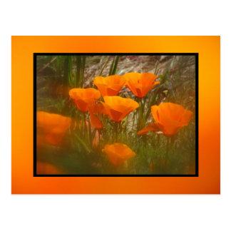 Flores de la amapola de California Tarjetas Postales