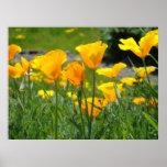 Flores de la amapola de las AMAPOLAS de las ILUSTR Posters