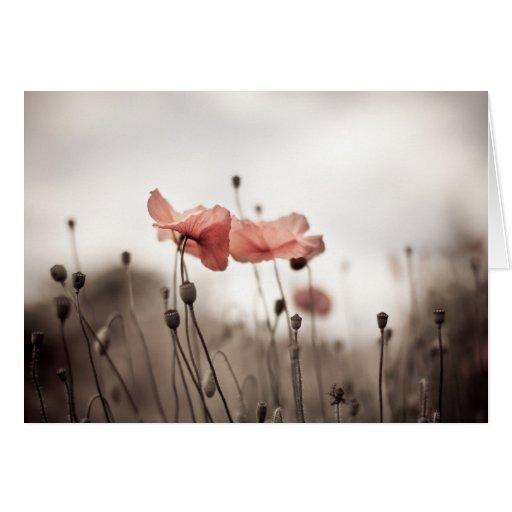Flores de la amapola tarjeta de felicitación