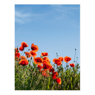 Flores de la amapola tarjetas postales