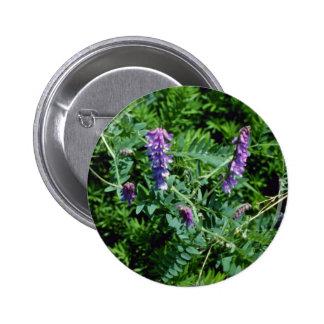 Flores de la arveja de la vaca de la lavanda (Vici Pin