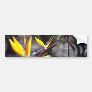 Flores de la ave del paraíso pegatina para auto