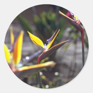 Flores de la ave del paraíso pegatina redonda