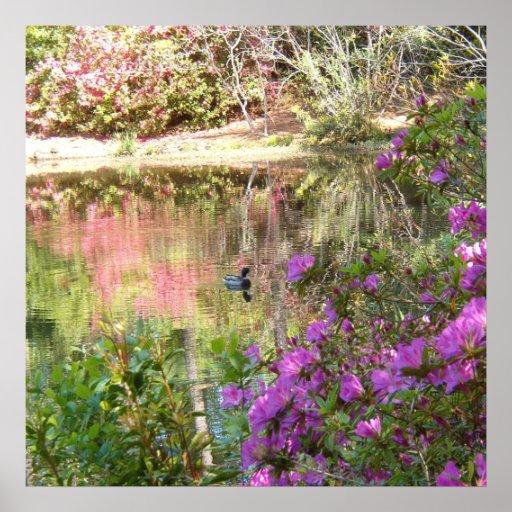 Flores de la azalea por la charca del pato póster