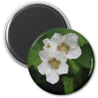 Flores de la baya iman