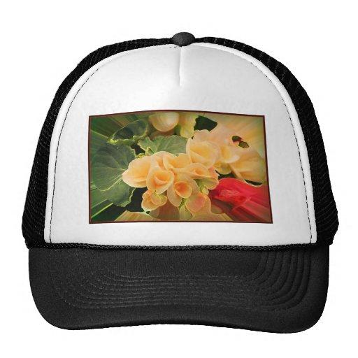 Flores de la begonia gorro de camionero