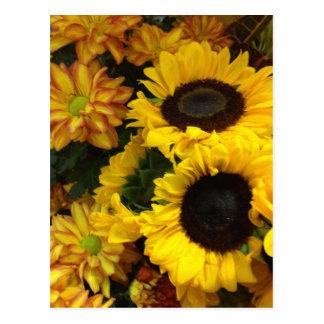 Flores de la caída del girasol postal