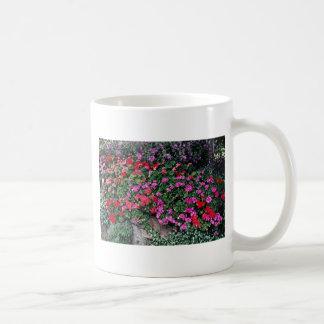 Flores de la cama del Pelargonium Tazas