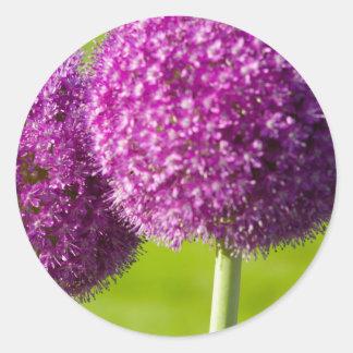 Flores de la cebolla púrpura en el jardín público pegatina redonda