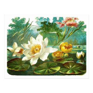 Flores de la charca del Victorian Postal