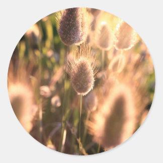 Flores de la cola del algodón del oro