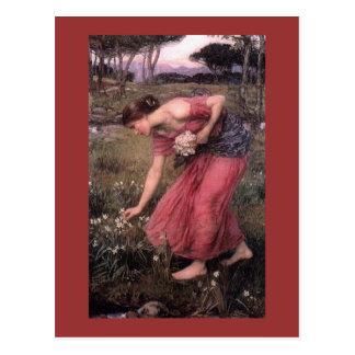 Flores de la cosecha del narciso en el prado tarjeta postal