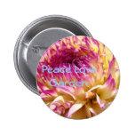 Flores de la dalia del rosa de botón del jardín de pin