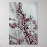 Flores de la flor de cerezo de la primavera impresiones