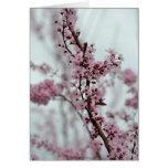 Flores de la flor de cerezo de la primavera felicitacion