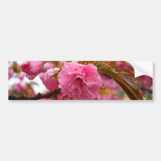 Flores de la flor de cerezo de las rosas fuertes