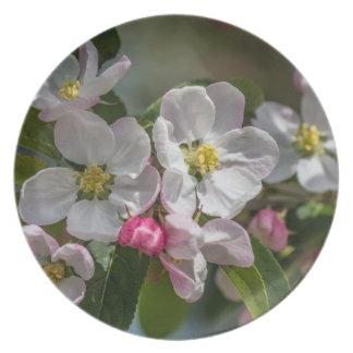 Flores de la flor de cerezo platos para fiestas