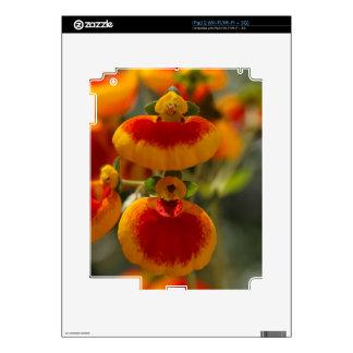 Flores de la flor del monedero de una señora calcomanía para iPad 2