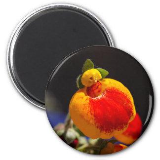 Flores de la flor del monedero de una señora imán redondo 5 cm