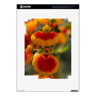 Flores de la flor del monedero de una señora iPad 3 pegatina skin