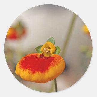 Flores de la flor del monedero de una señora pegatina redonda
