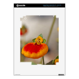 Flores de la flor del monedero de una señora pegatina skin para iPad 3